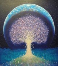Drevo-roda-202
